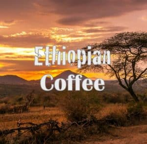 Volcanica Coffee Ethiopia Yirgacheffe Coffee Medium Roast 16oz