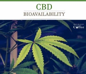 CBD and Bio Availability
