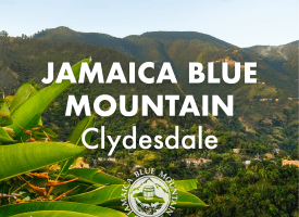 Jamaica Blue Mountain Coffee - Clydesdale