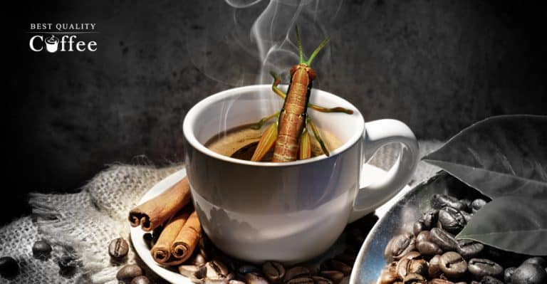 Are There Bugs in My Coffee?